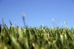 небо травы стоковое изображение rf