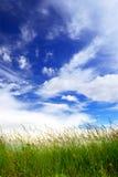 небо травы Стоковое Изображение