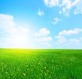небо травы Стоковое Фото