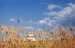 небо ушей Стоковая Фотография RF
