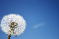 небо цветка Стоковое фото RF