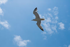 небо чайки против Стоковые Фото