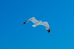небо чайки элемента конструкции Стоковые Изображения RF