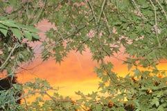 Небо через деревья стоковые изображения rf