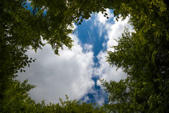 Небо через деревья Стоковое фото RF