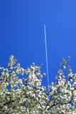 небо яблока воздушных судн Стоковые Изображения