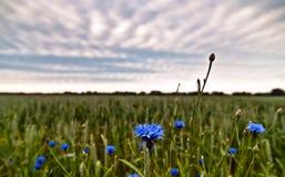 небо cornflower Стоковая Фотография