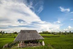 Небо fields рис Стоковое Фото