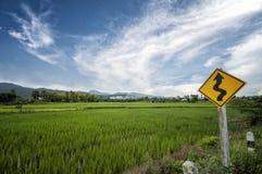 Небо fields рис Стоковые Изображения