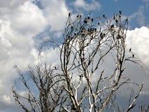 Небо Nakuru стоковое фото rf