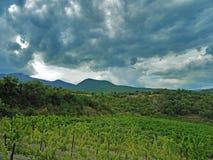 Небо overcast над лозами Стоковые Изображения