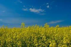 небо rapeseed Стоковые Изображения
