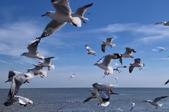 небо seascape чайок природы стоковое изображение