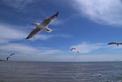 небо seascape чайок природы Стоковые Фотографии RF