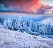 Невероятный восход солнца зимы в прикарпатских горах с снегом co Стоковое Изображение RF