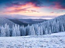 Невероятный заход солнца зимы в прикарпатских горах с cov снега Стоковое Изображение RF