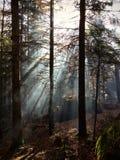 Невероятный лес волшебного эльфа стоковая фотография rf