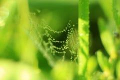 Невесомость на траве Стоковое Изображение RF