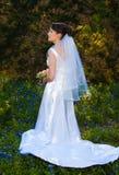 Невеста в поле bluebonnet стоковые изображения