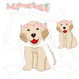 Невеста золотого Retriever щенка с цветком Розы пинка кроны, белой вуалью День валентинки Лабрадора собаки младенца также вектор  Стоковые Фотографии RF