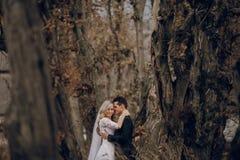 Невеста идя в золотую природу осени Стоковая Фотография RF