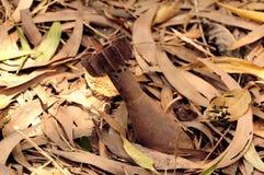 невзорвавшийся ступки круглое Стоковые Фотографии RF