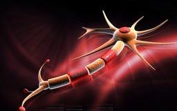 неврон Стоковое Изображение