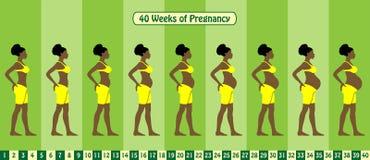 40 недель этапов беременности с женщиной Афро американской носят бюстгальтер иллюстрация вектора