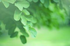 Нежная зеленая предпосылка природы Стоковые Фото