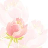 Нежная предпосылка с розовыми красивыми цветками 10 eps Стоковое Изображение