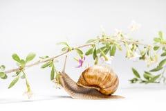 Нежное касание цветков улитки и goji природы стоковые изображения rf