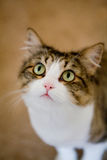 нежность кота милая стоковое фото rf