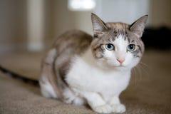 нежность кота милая стоковые изображения rf