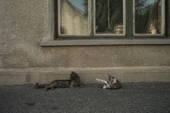 Нежность кота Стоковые Изображения