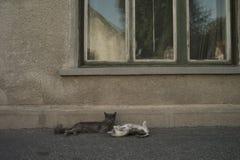 Нежность кота Стоковая Фотография RF