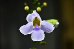 Нежность орхидей сладостная playnig света цветка предпосылки Закройте вверх по розовой орхидее на зеленой предпосылке Цветок орхи Стоковая Фотография RF