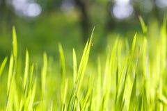 нежность предпосылки зеленая Стоковое Фото