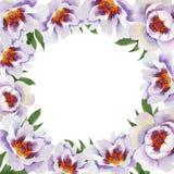 Нежно розовые пионы Флористический ботанический цветок Квадрат орнамента границы рамки иллюстрация вектора