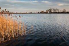 Нежные волны на озере, тростники в воде и деревья на береге стоковое фото