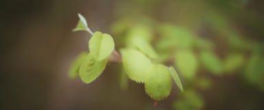 Нежные листья конца дерева вверх стоковое фото