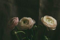 Нежный белый цветок лютика Стоковое фото RF