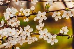 Нежный будить весны Стоковые Изображения RF
