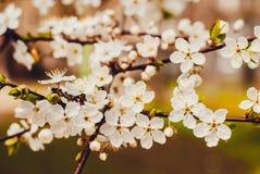 Нежный будить весны Стоковое фото RF
