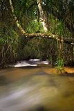 нежный водопад Стоковое Изображение RF