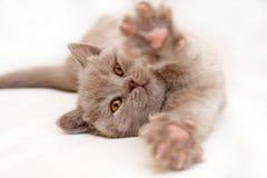 Нежный котенок протягивает лежать на светлой предпосылке стоковые изображения rf