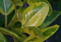 Нежые листья Стоковые Изображения RF
