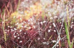 Нежые цветки Стоковые Изображения RF