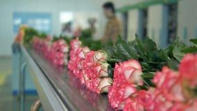Незавершенная работа на фабрике цветка сток-видео