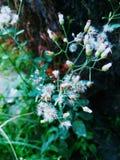 Незначительная трава Стоковая Фотография RF