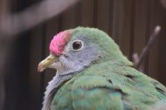 Неизвестная птица в зоопарке Феникса Стоковые Изображения RF